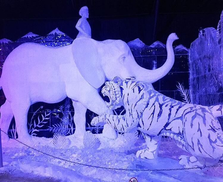 Elephant and tiger