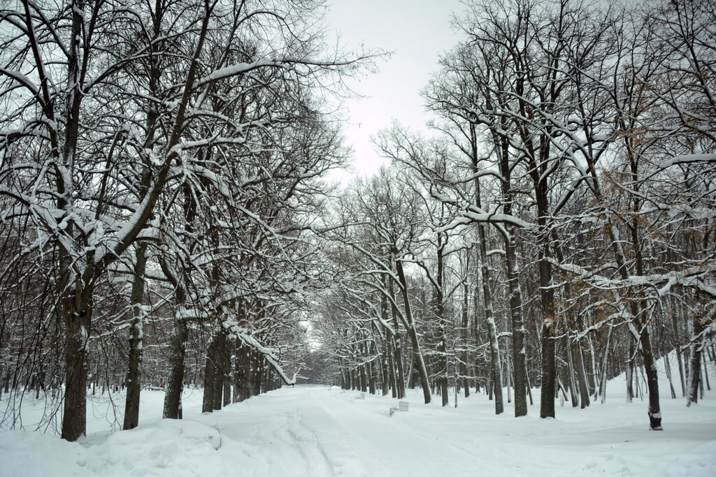 You are in a real Russian winter forest