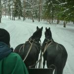 Horse Drawn Sleigh Ride in Pushkin