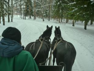 Horse Drawn Sleigh Ride in Pushkin